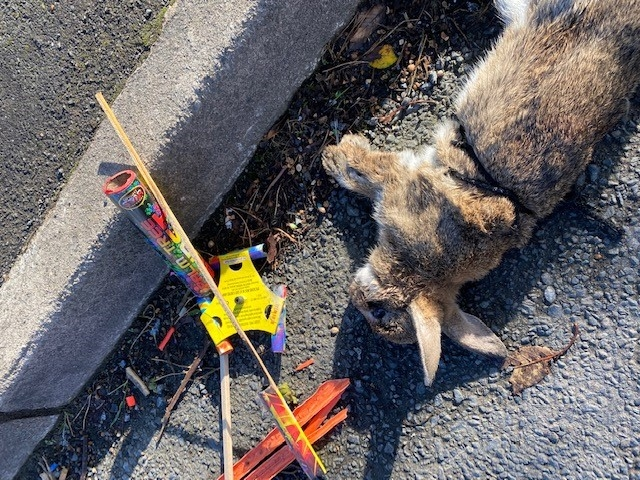 'Barbaric abuse of our local wildlife' – USPCA offers reward for information after rocket is strapped to rabbit