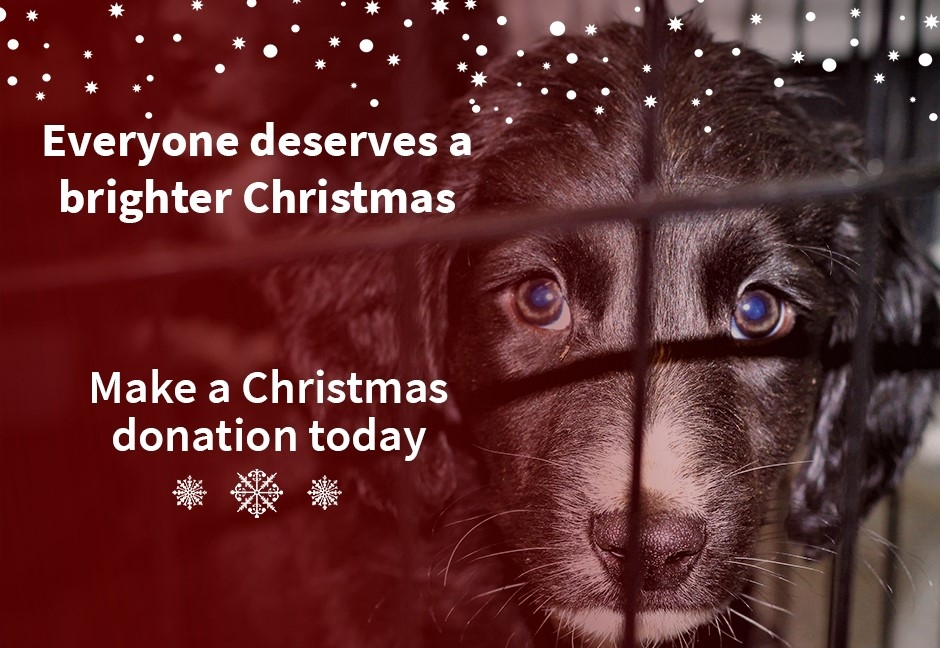 Make a Christmas Donation Today
