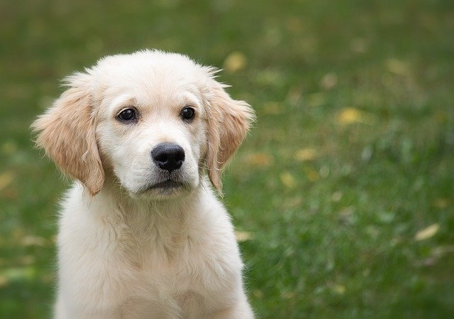 The Importance of Getting your Puppy Groomed