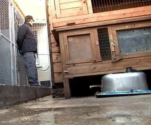 Belfast Family Members Admit to Animal Cruelty Offences