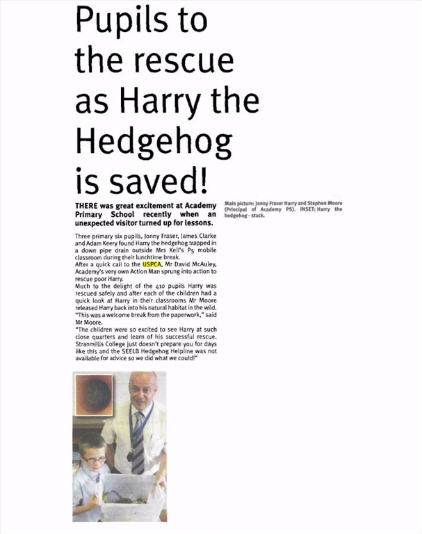 newtownards-chronicle-07-oct-2013-harry-the-hedgehog