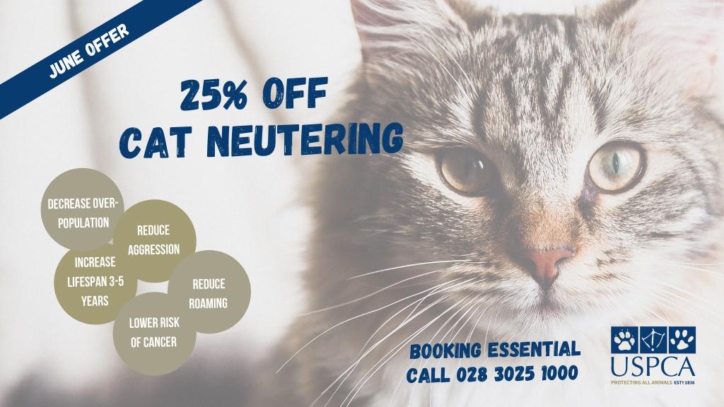 Veterinary Offer - Cats